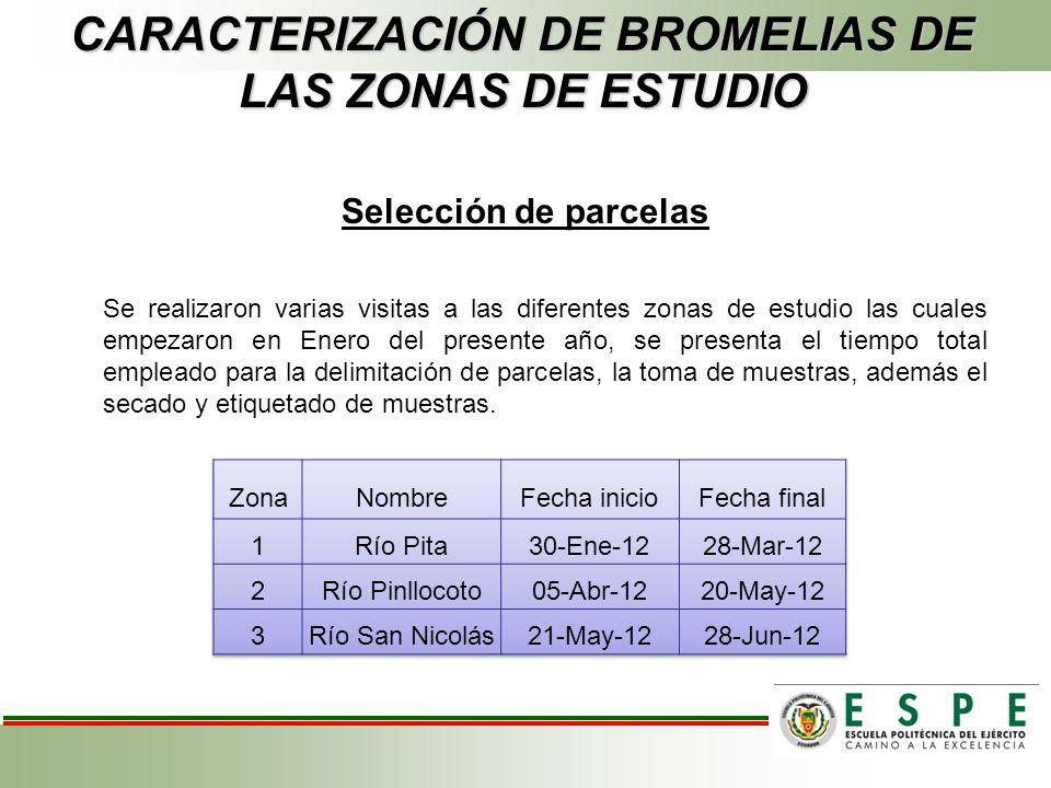 CARACTERIZACIÓN DE BROMELIAS DE LAS ZONAS DE ESTUDIO