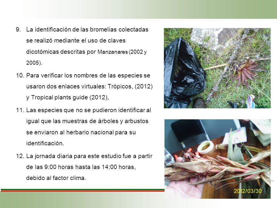 La identificación de las bromelias colectadas se realizó mediante el uso de claves dicotómicas descritas por Manzanares (2002 y 2005).