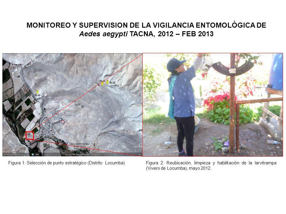 MONITOREO Y SUPERVISION DE LA VIGILANCIA ENTOMOLÓGICA DE Aedes aegypti TACNA, 2012 – FEB 2013