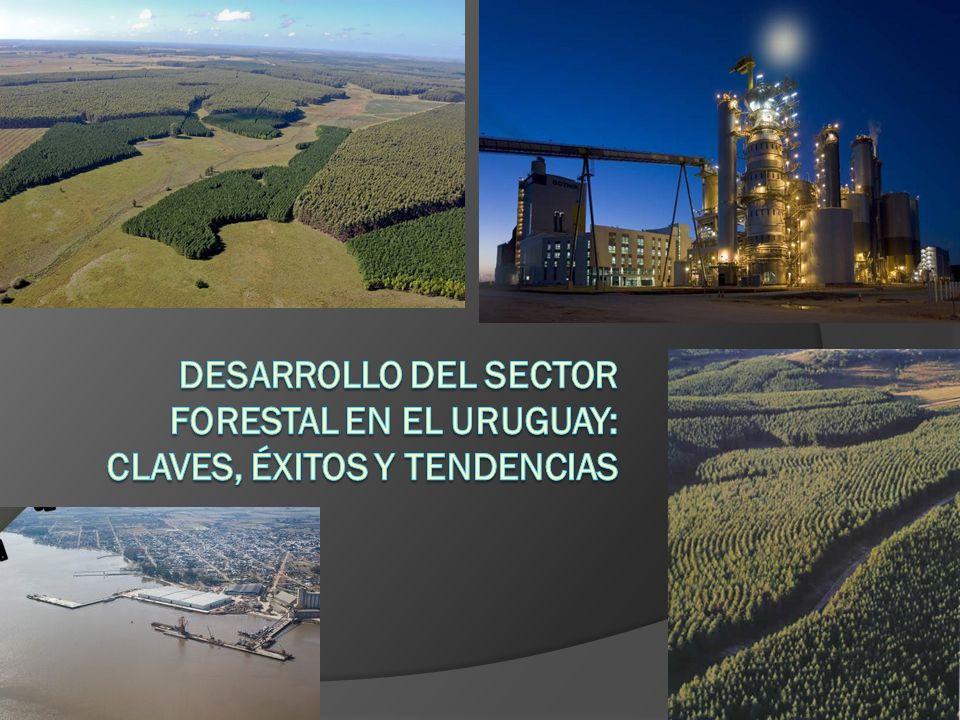 Desarrollo del sector forestal en el Uruguay: claves, éxitos y tendencias
