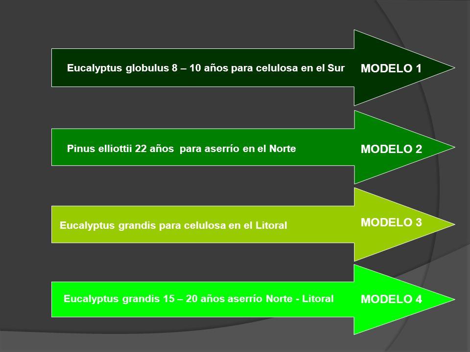 MODELO 1 MODELO 2 MODELO 3 MODELO 4