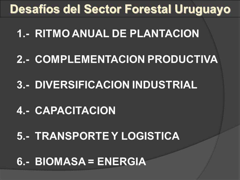 Desafíos del Sector Forestal Uruguayo