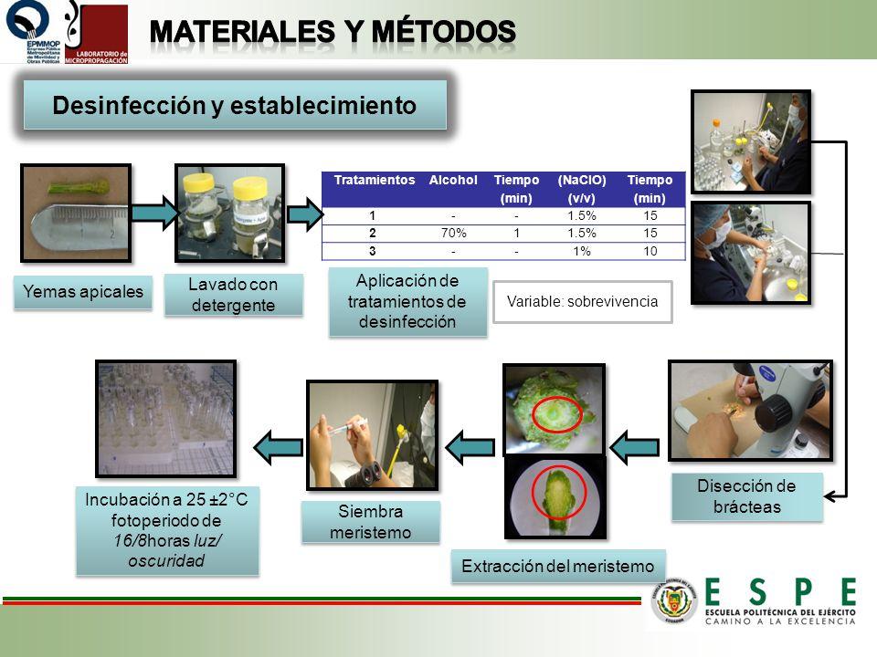 Desinfección y establecimiento