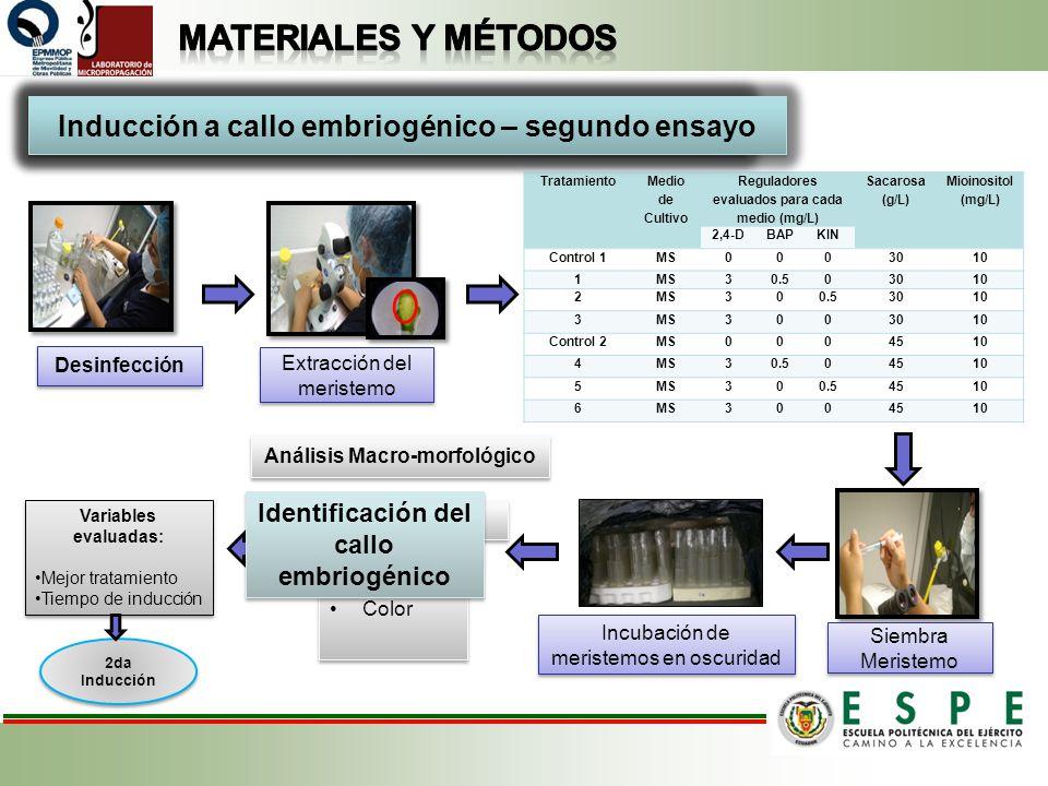 Materiales y métodos Inducción a callo embriogénico – primer ensayo