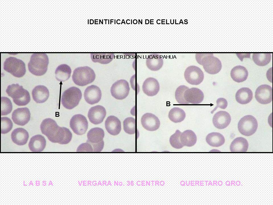 IDENTIFICACION DE CELULAS