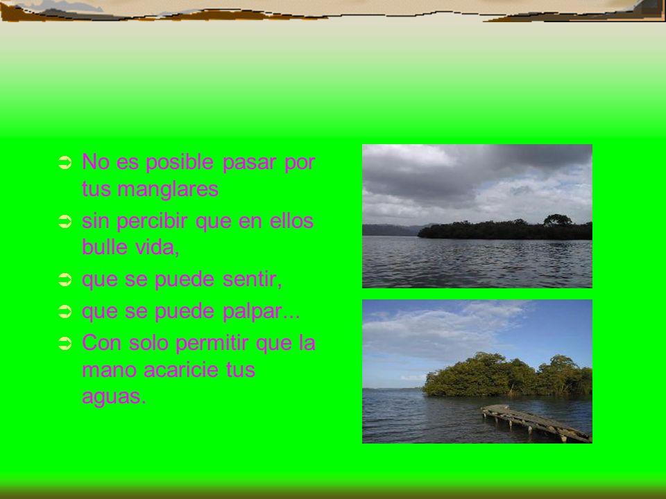 No es posible pasar por tus manglares