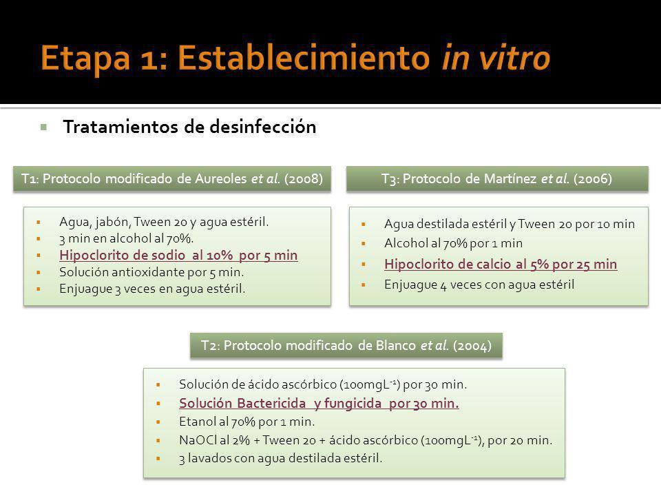 Etapa 1: Establecimiento in vitro
