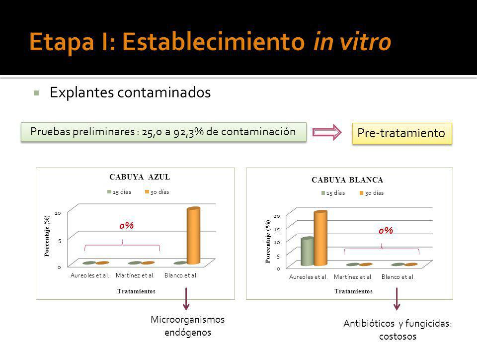 Etapa I: Establecimiento in vitro
