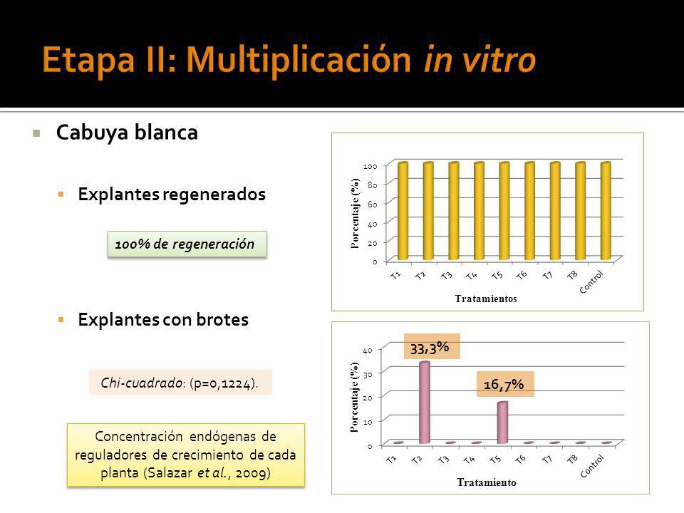 Etapa II: Multiplicación in vitro