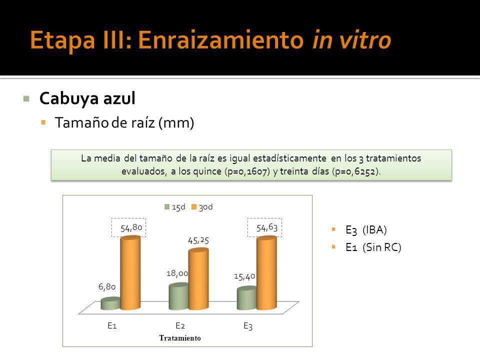 Etapa III: Enraizamiento in vitro