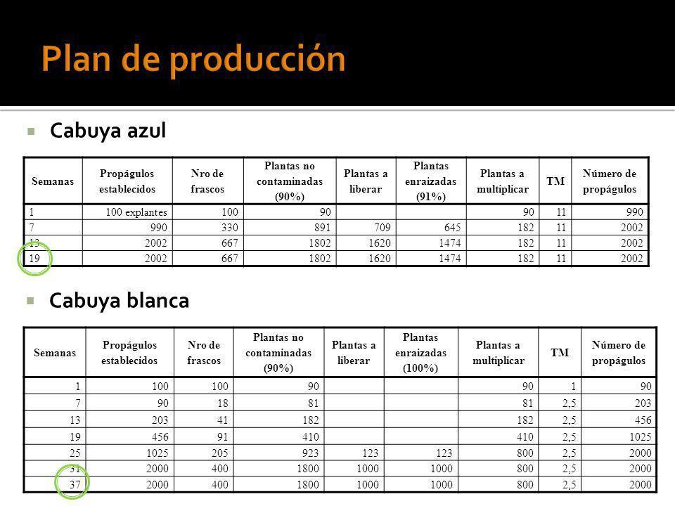 Plan de producción Cabuya azul Cabuya blanca Semanas