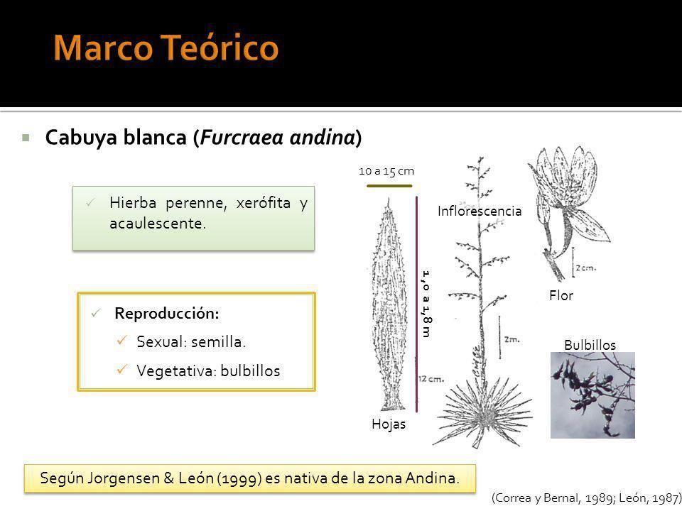 Según Jorgensen & León (1999) es nativa de la zona Andina.