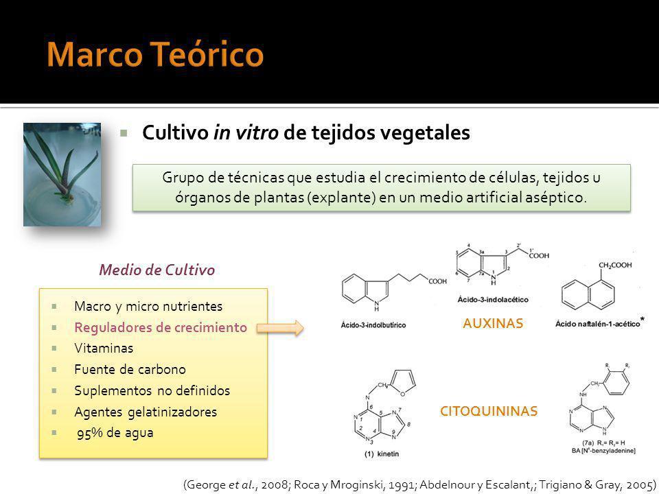 Marco Teórico Cultivo in vitro de tejidos vegetales
