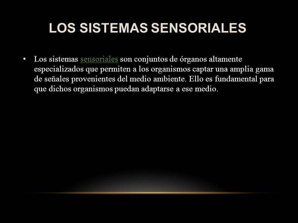 LOS SISTEMAS SENSORIALES