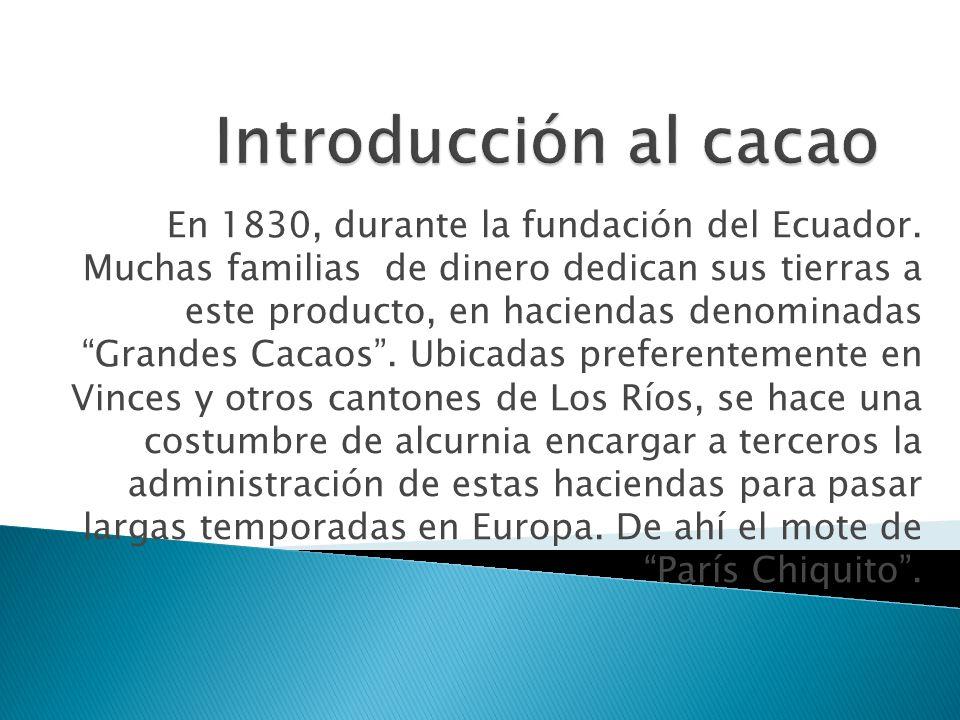 Introducción al cacao
