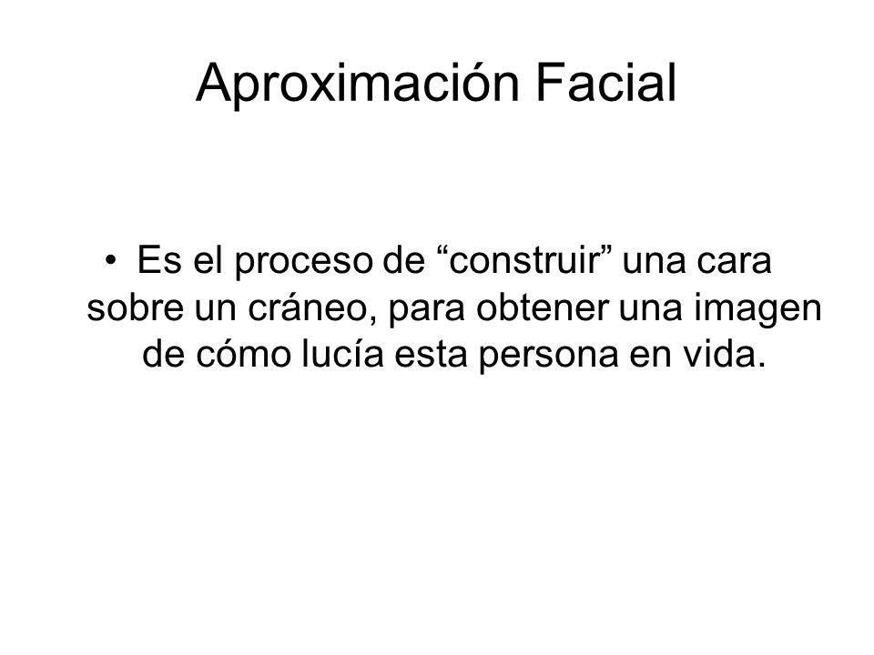 Aproximación Facial Es el proceso de construir una cara sobre un cráneo, para obtener una imagen de cómo lucía esta persona en vida.