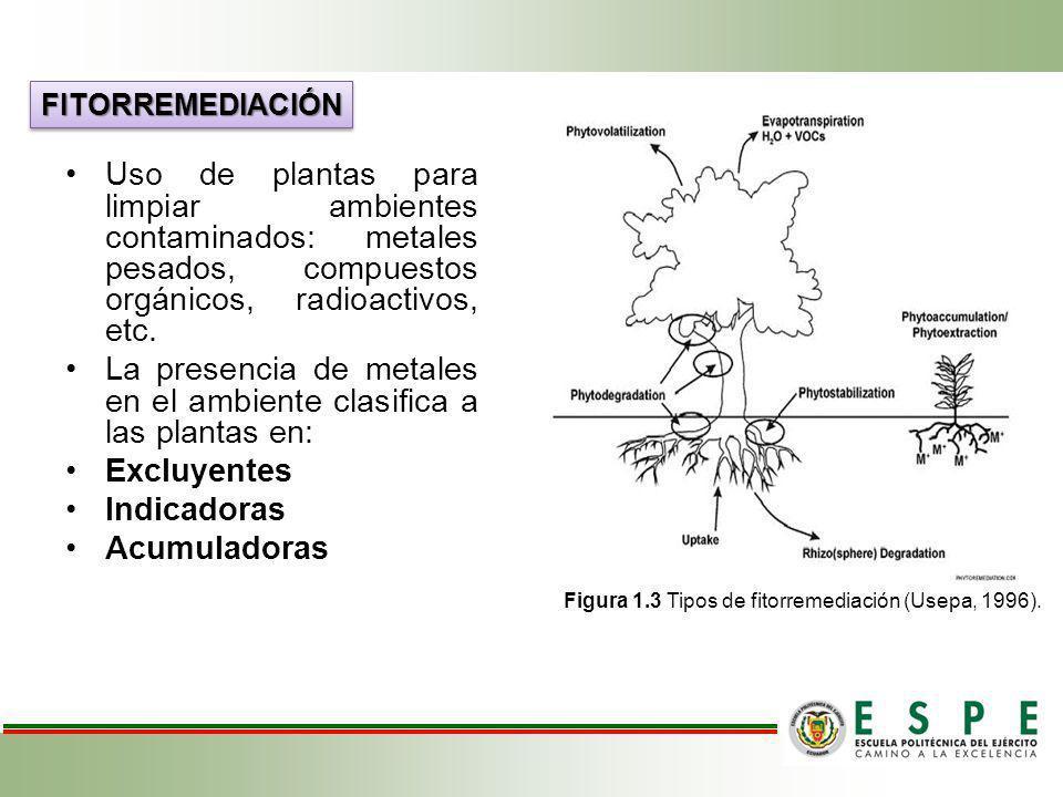 La presencia de metales en el ambiente clasifica a las plantas en: