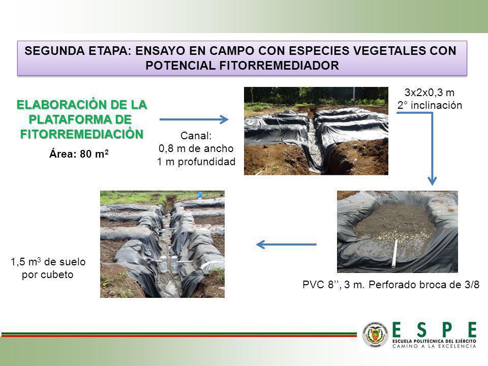SEGUNDA ETAPA: ENSAYO EN CAMPO CON ESPECIES VEGETALES CON