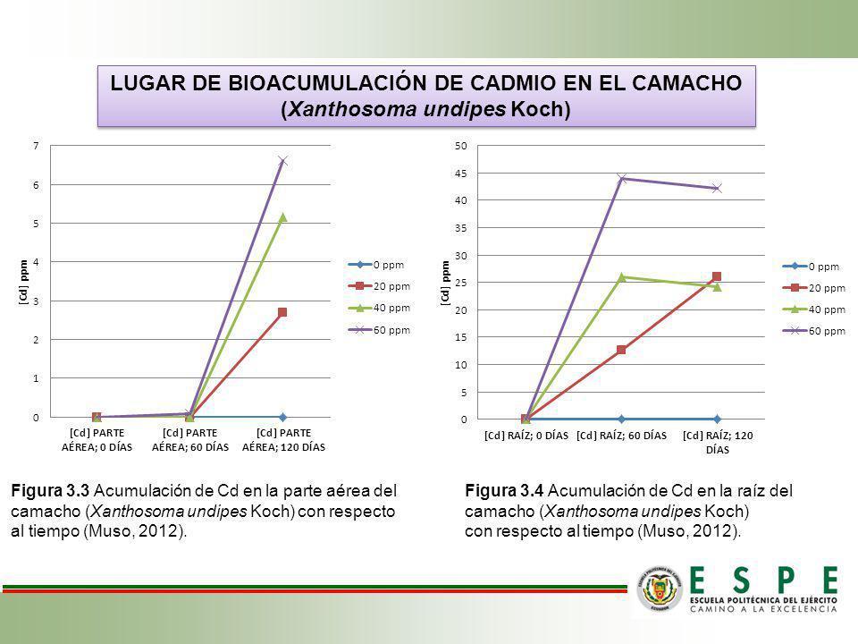 LUGAR DE BIOACUMULACIÓN DE CADMIO EN EL CAMACHO
