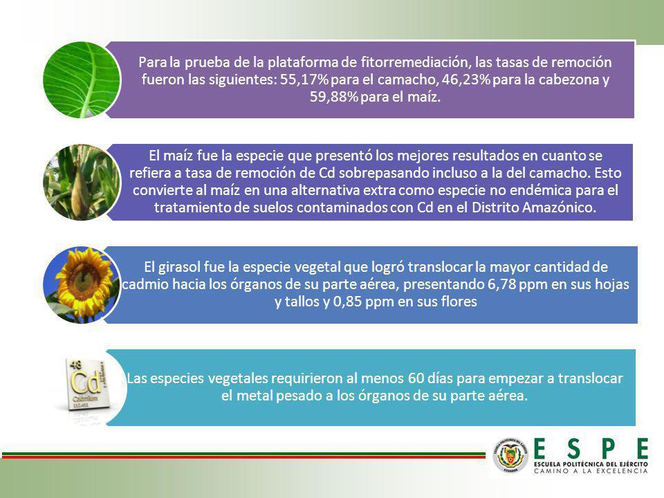 Para la prueba de la plataforma de fitorremediación, las tasas de remoción fueron las siguientes: 55,17% para el camacho, 46,23% para la cabezona y 59,88% para el maíz.