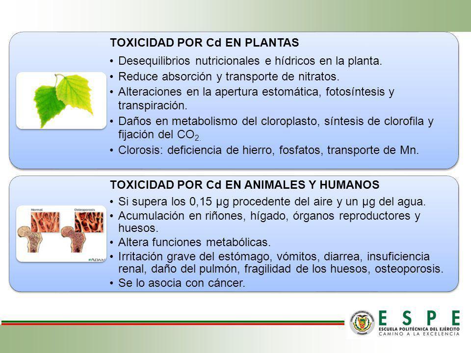 TOXICIDAD POR Cd EN PLANTAS