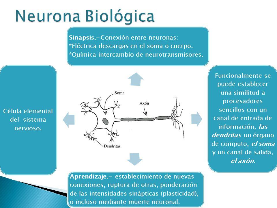 Célula elemental del sistema nervioso.