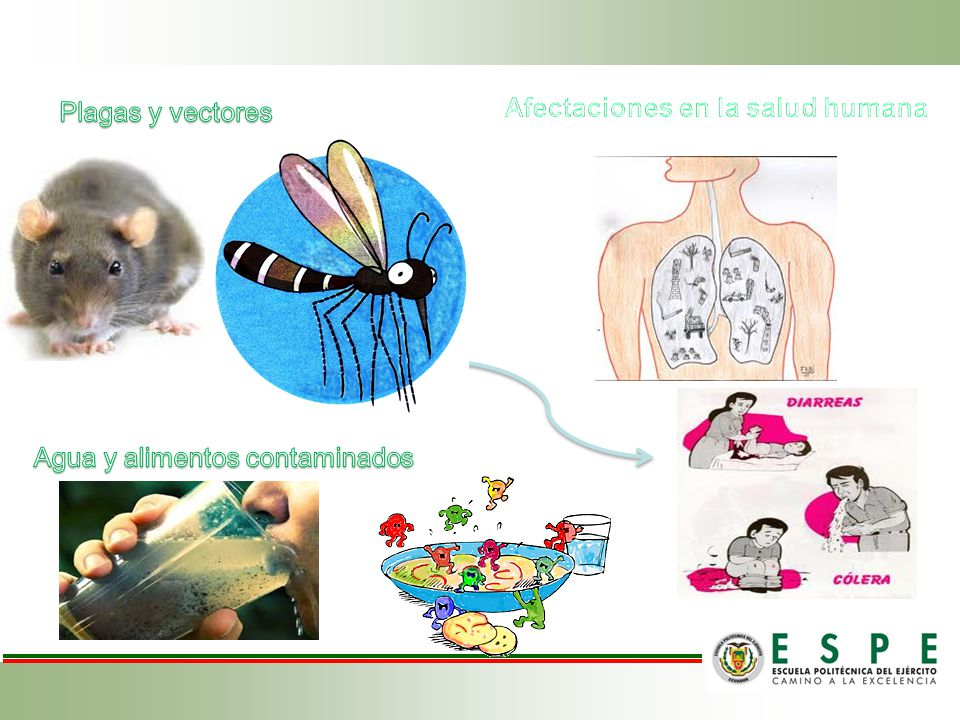 Afectaciones en la salud humana
