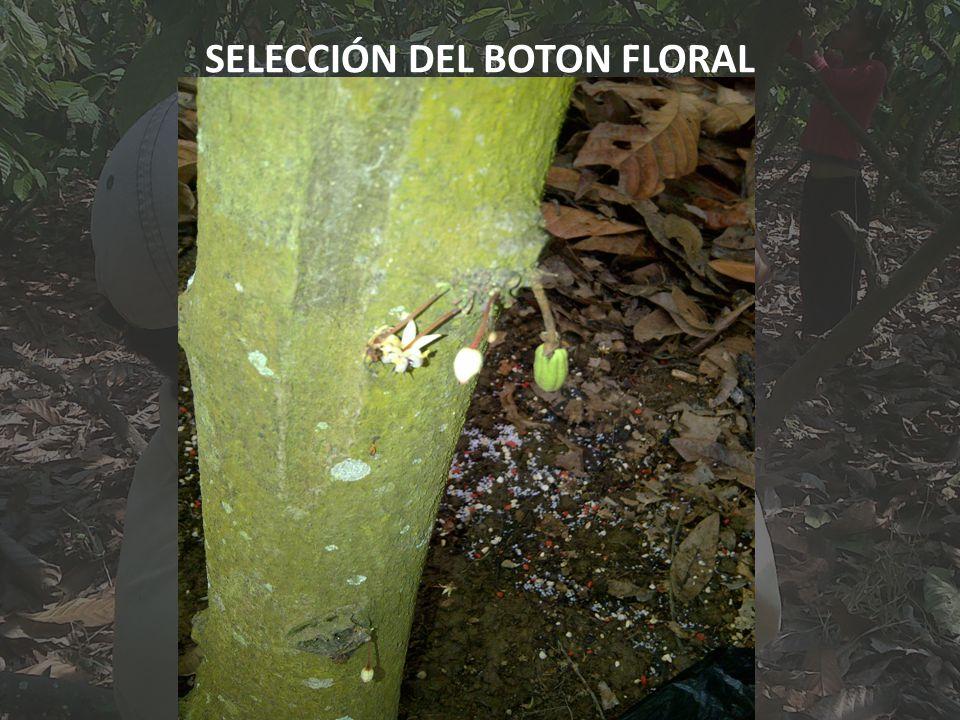 SELECCIÓN DEL BOTON FLORAL