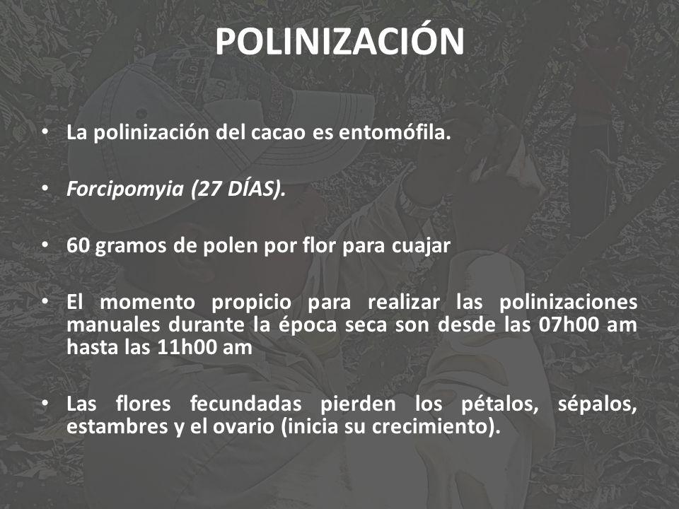 POLINIZACIÓN La polinización del cacao es entomófila.