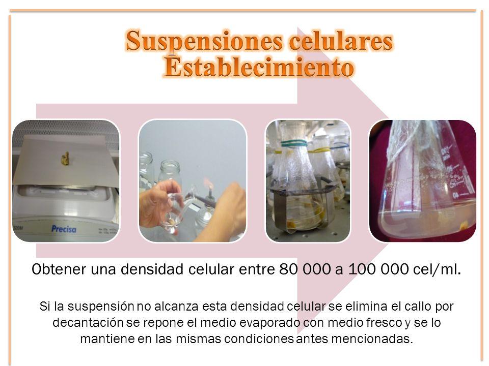 Suspensiones celulares