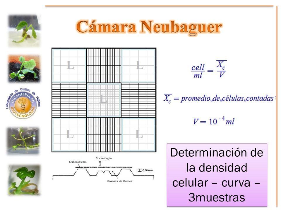 Determinación de la densidad celular – curva – 3muestras
