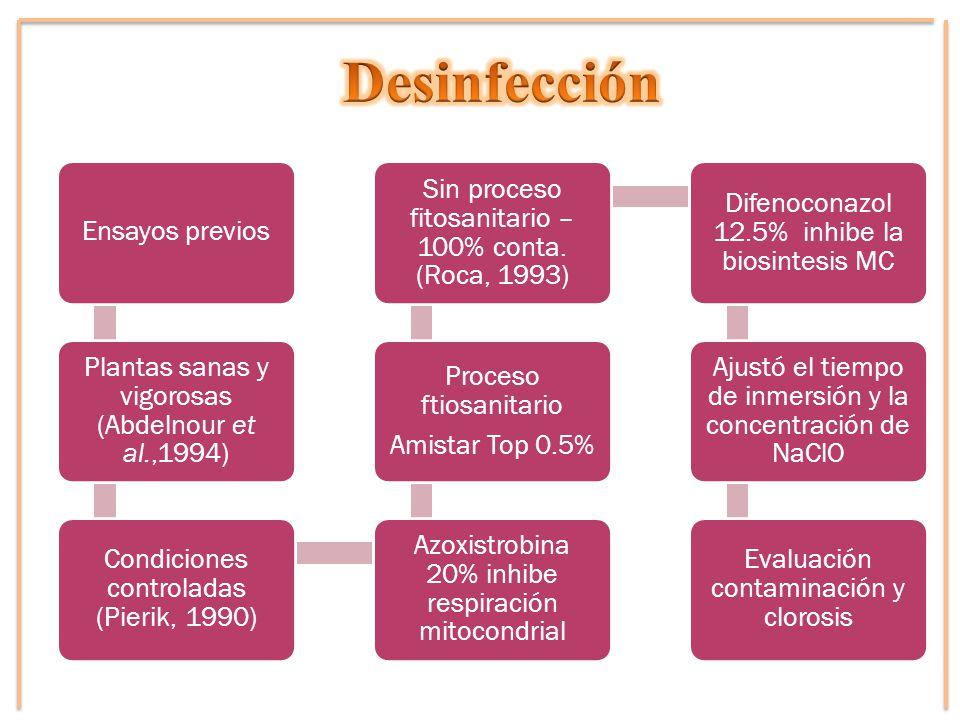 Desinfección Ensayos previos