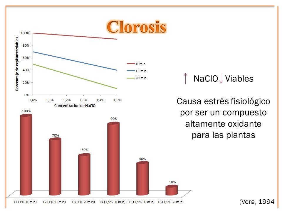 Clorosis NaClO Viables