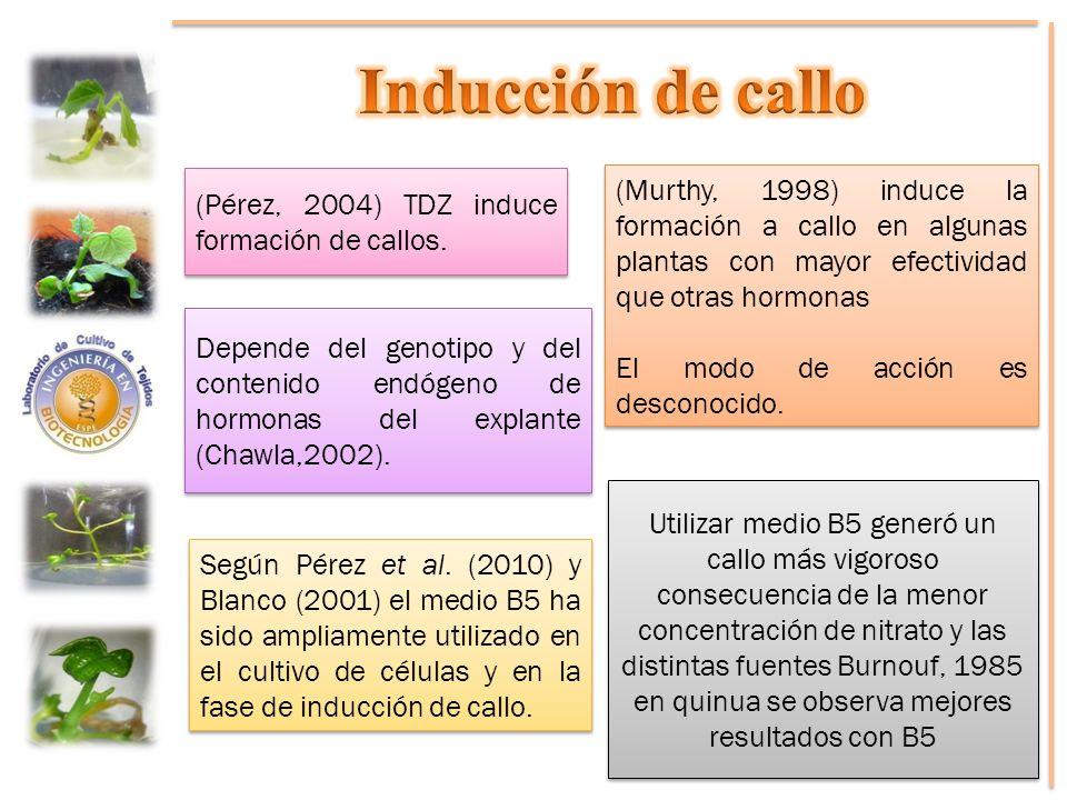 Inducción de callo (Pérez, 2004) TDZ induce formación de callos.