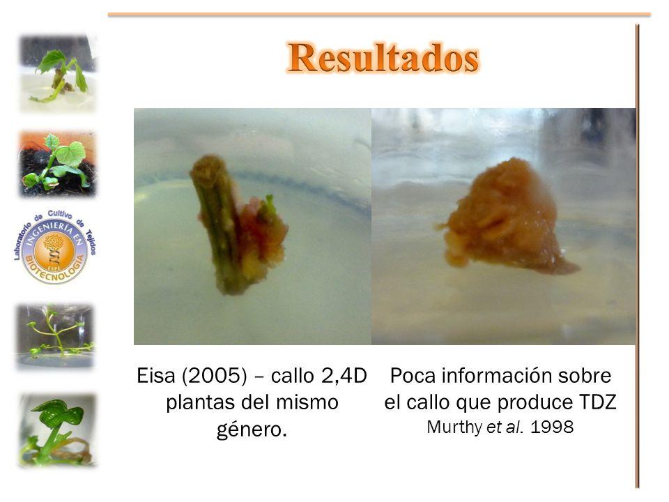 Resultados Eisa (2005) – callo 2,4D plantas del mismo género.