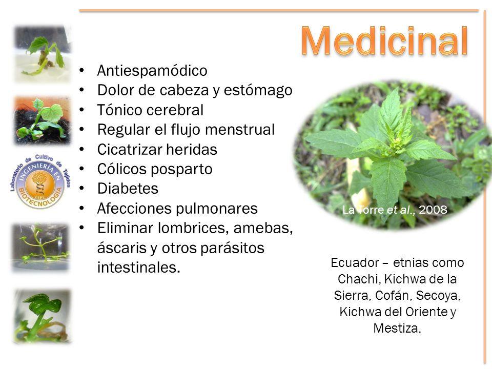 Medicinal Antiespamódico Dolor de cabeza y estómago Tónico cerebral
