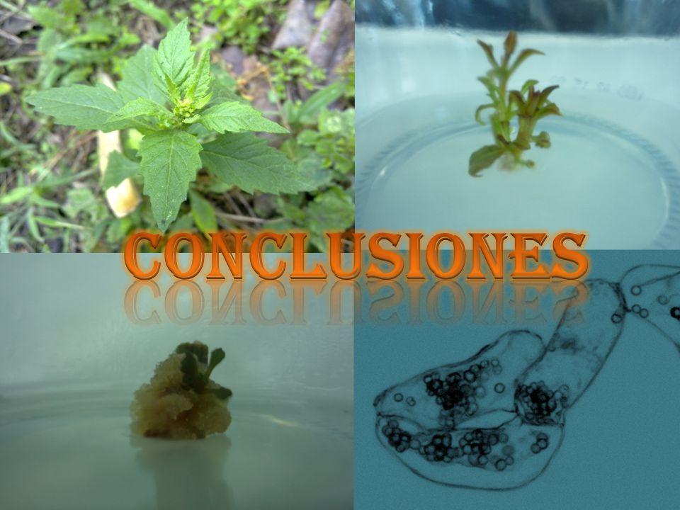 Conclusiones Viabilidad