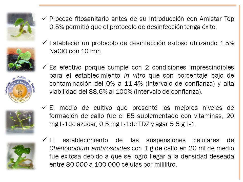 Proceso fitosanitario antes de su introducción con Amistar Top 0