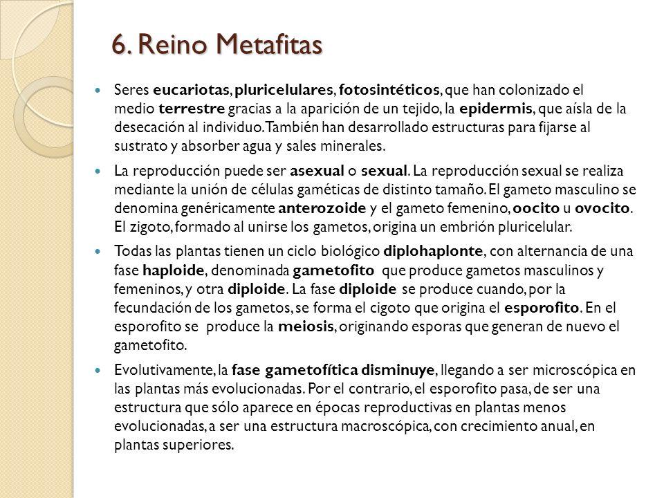 6. Reino Metafitas