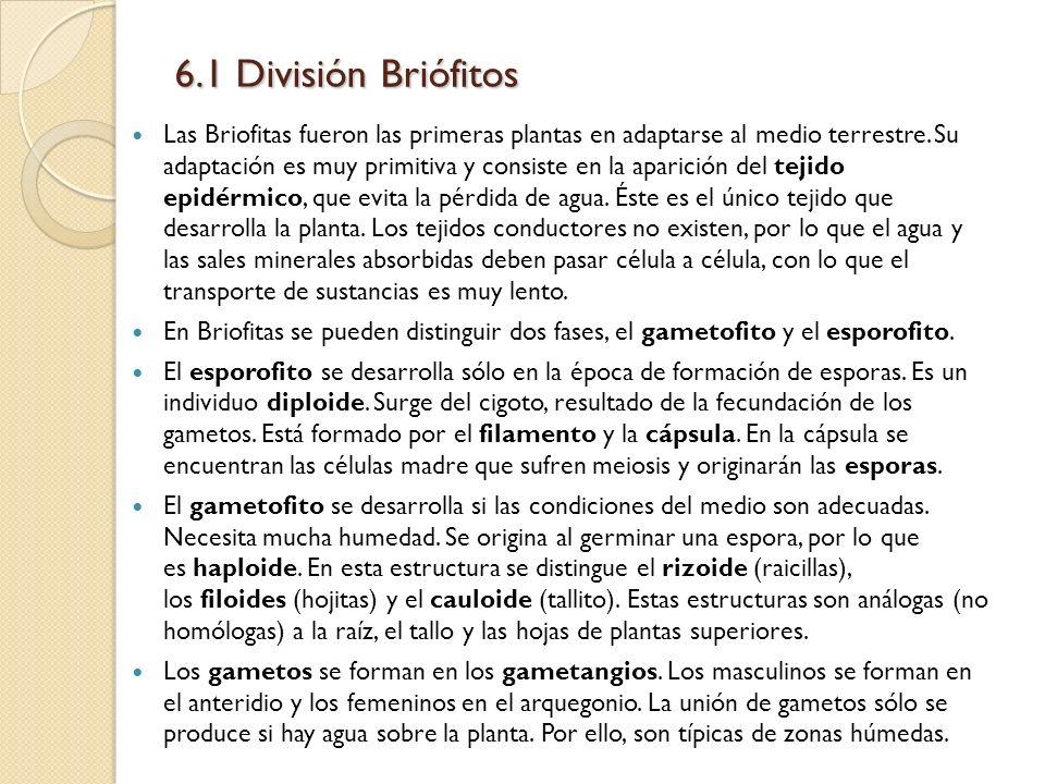 6.1 División Briófitos