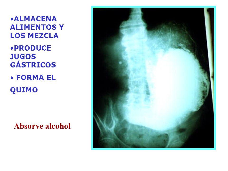 Absorve alcohol ALMACENA ALIMENTOS Y LOS MEZCLA