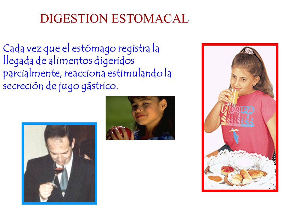 DIGESTION ESTOMACAL