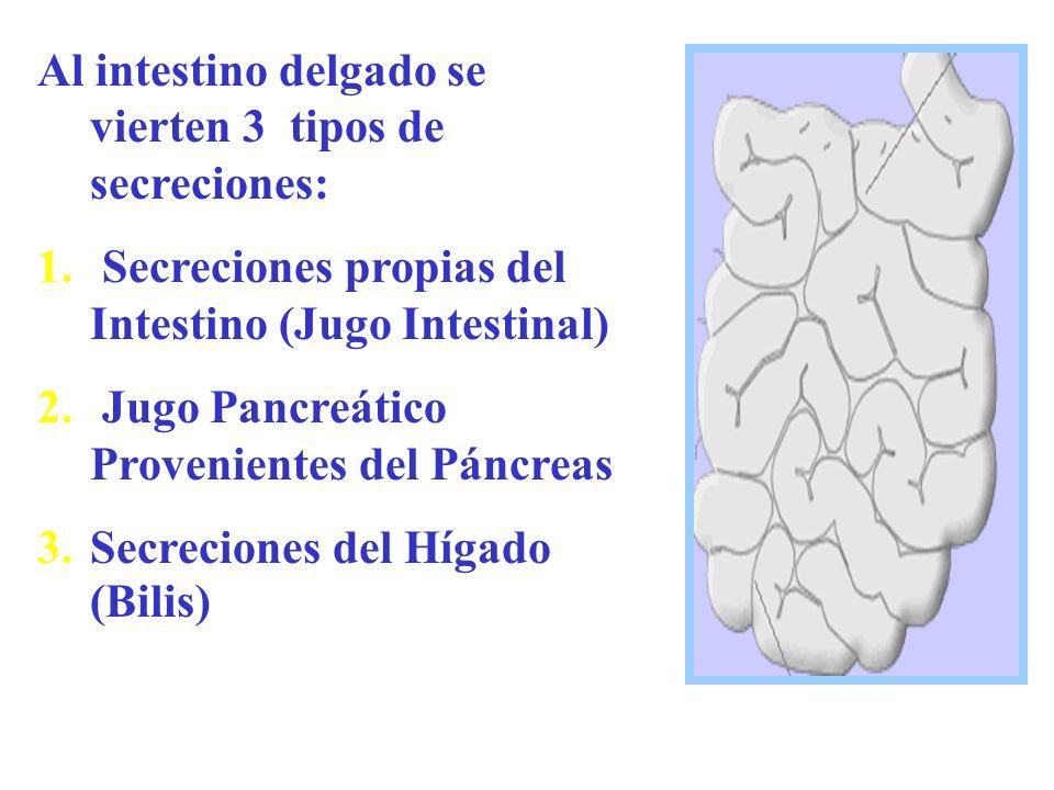 Al intestino delgado se vierten 3 tipos de secreciones: