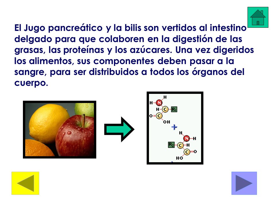 El Jugo pancreático y la bilis son vertidos al intestino delgado para que colaboren en la digestión de las grasas, las proteínas y los azúcares.