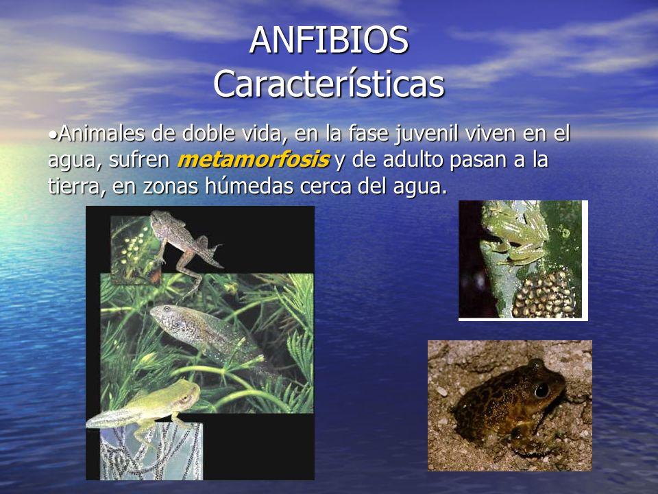 ANFIBIOS Características