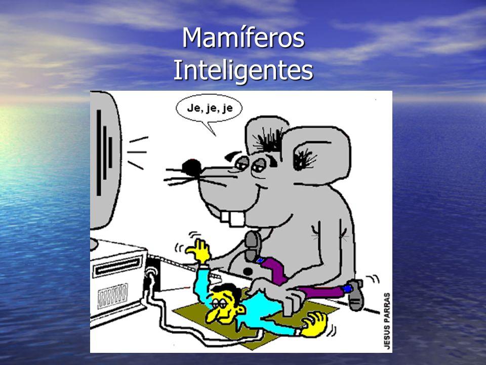 Mamíferos Inteligentes