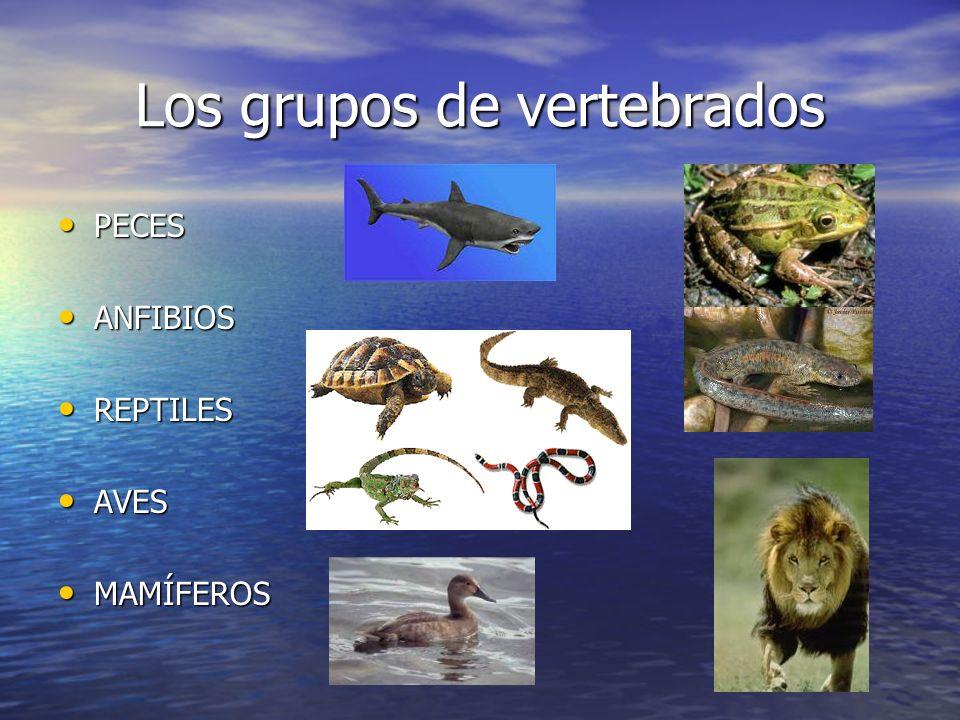 Los grupos de vertebrados