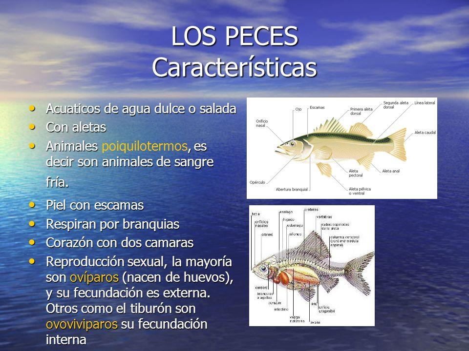 LOS PECES Características