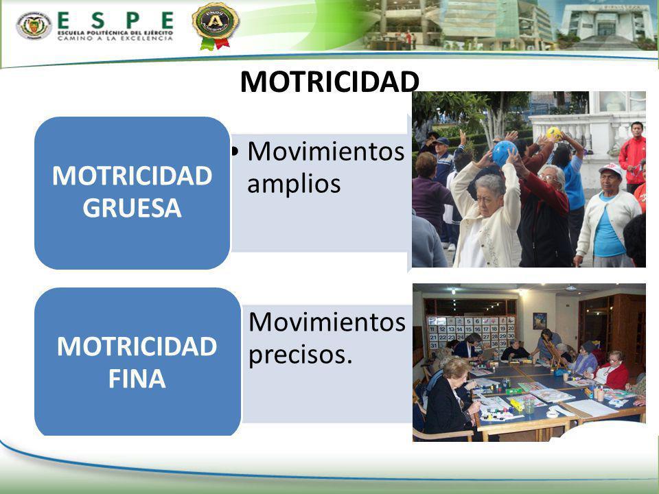 MOTRICIDAD MOTRICIDAD GRUESA Movimientos amplios MOTRICIDAD FINA