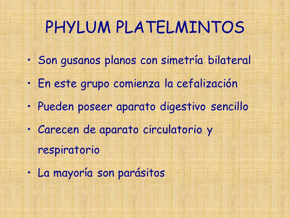 PHYLUM PLATELMINTOS Son gusanos planos con simetría bilateral